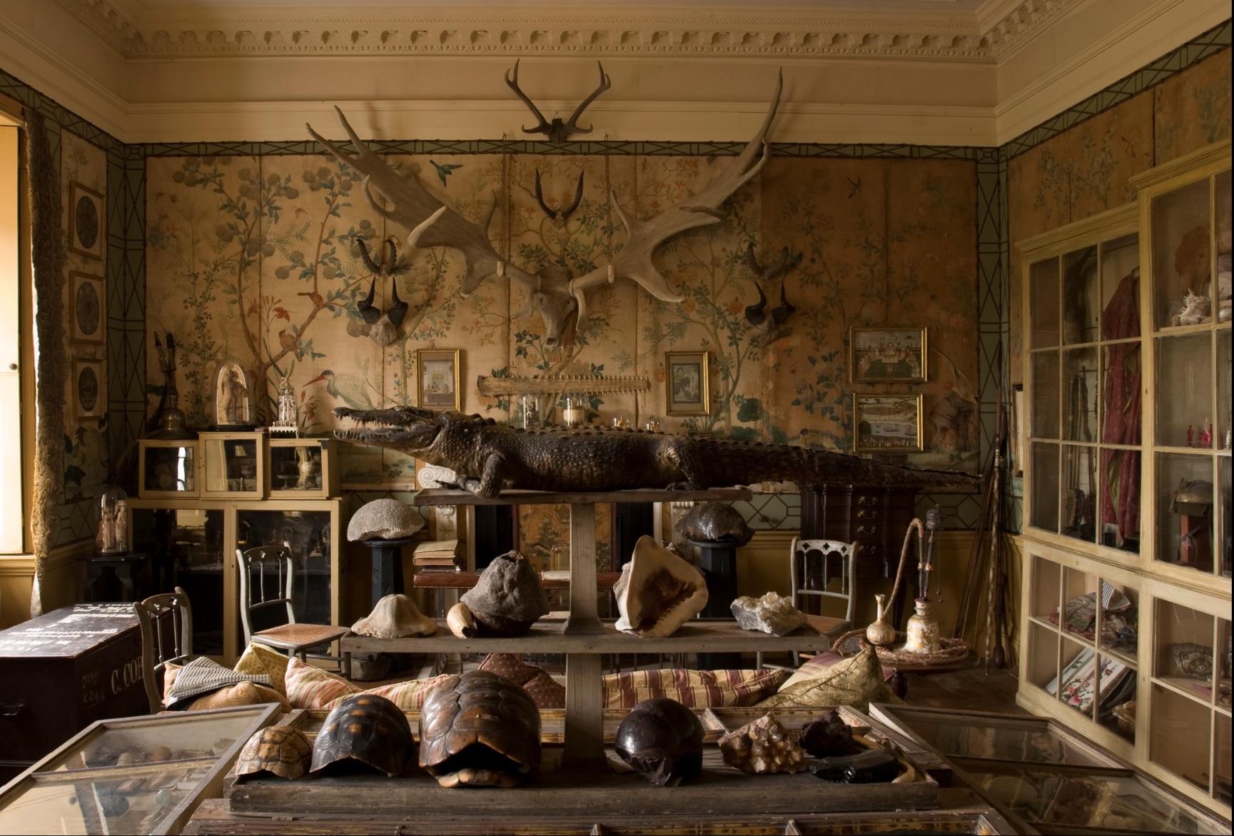 Cabinet of Curiosities, Hatchlands